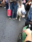 One cool dude in Neiwan, Taiwan