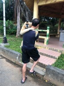 Taiwan gibbon