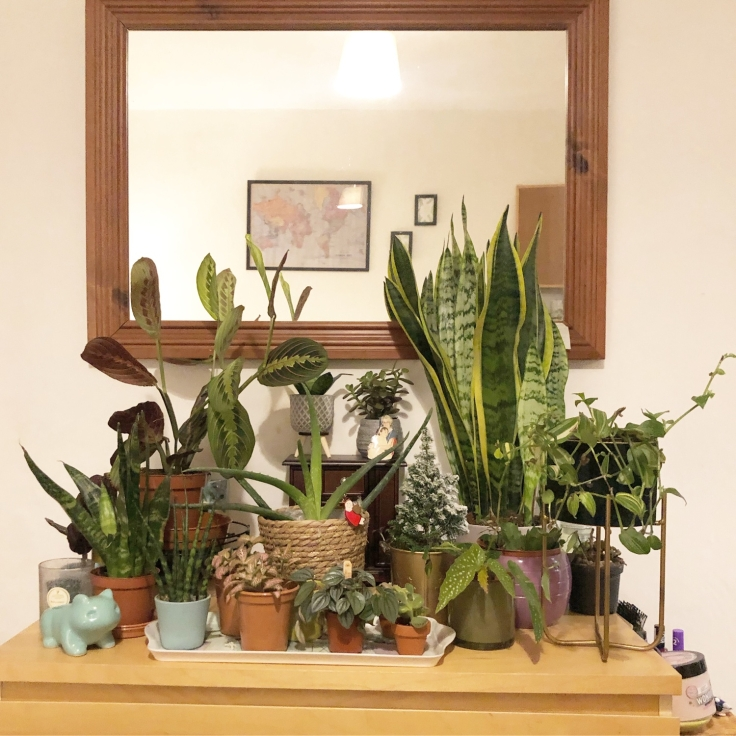 A large collection of green plants